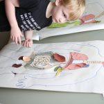 Anatomy Activities 15