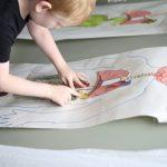 Anatomy Activities 14
