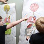 Anatomy Activities 19